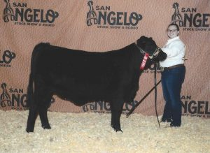 2nd in class Brangus show heifer.